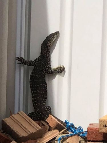Sand monitor pays Dawesville home a visit