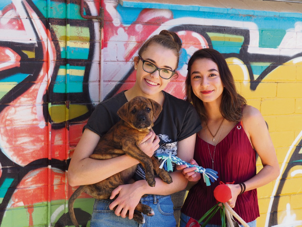 PLC Perth students Ava Gajdatsy and Sophia Gawan-Taylor designed and produced over 60 dog toys for pooches at the Shenton Park Dogs Refuge Home.