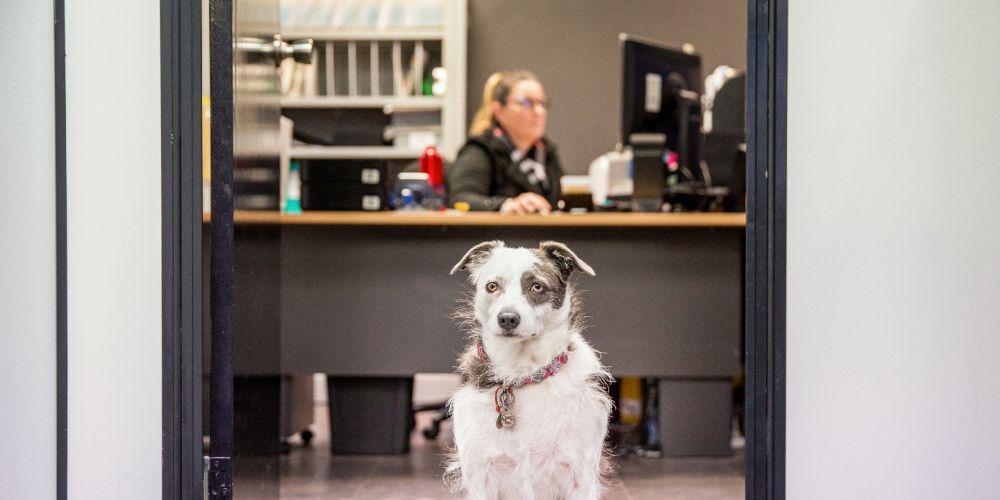Katrina and Lacey at work. Pic credit Kelly Pilgram.