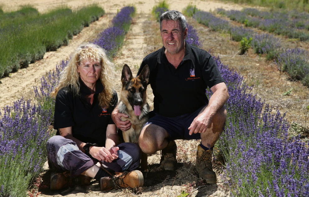 Karla Champion and Gary Wood from Yanchep Lavender with their dog Annie. Photo: Martin Kennealey d477303