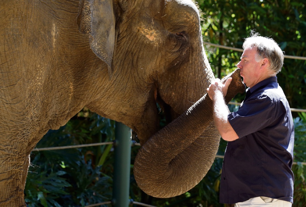 Perth Zoo records keeper Chris Wilson with Tricia the elephant.