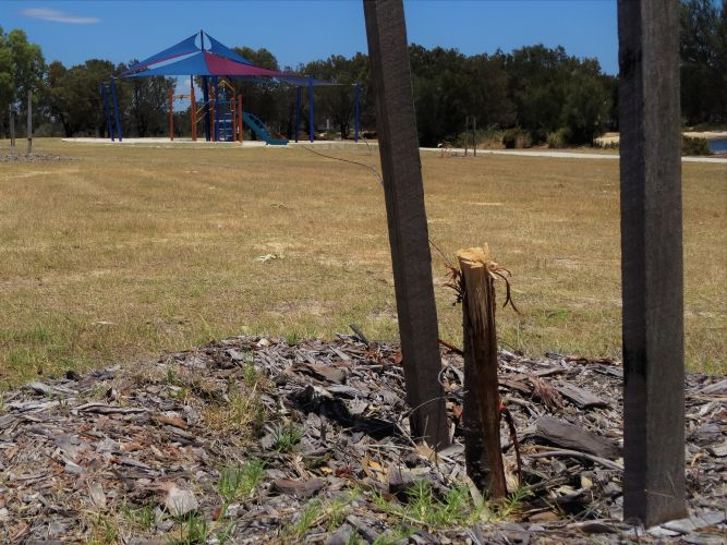 South Yunderup: trees vandalised and attacked with an axe