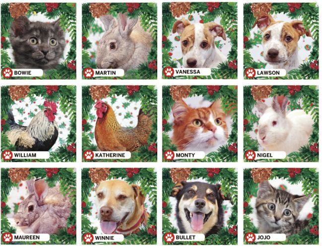 12 Strays of Christmas: from the RSPCA WA adoption centre, Malaga