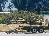 The felled tree being removed from the Colwyn Rd property.