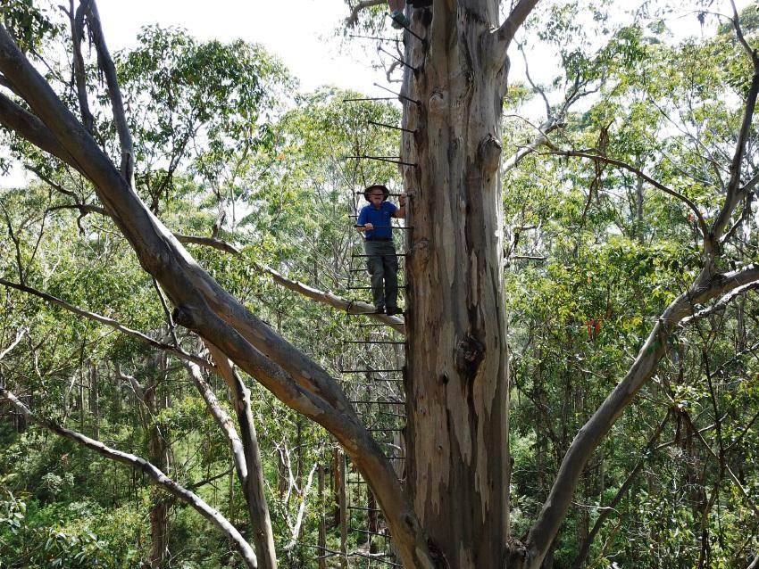 Derrick Melhuish (95) climbing the Gloucester Tree. Pictures: Danny Shelton, NoStoneUnturned