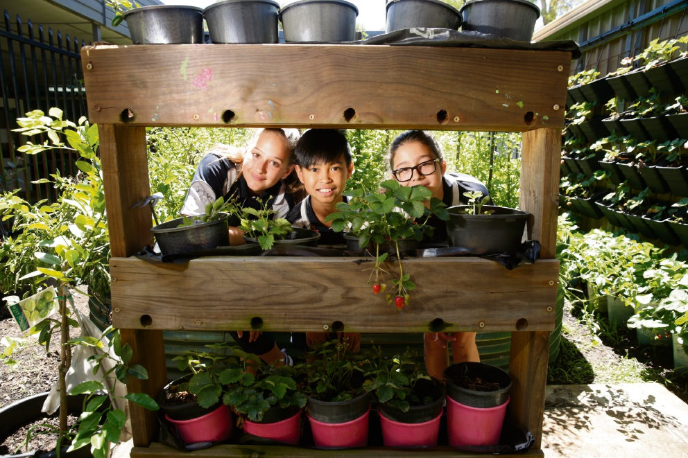 Haidee Swanby, Earl Balisacan and  Jasmin Roberts in veggie garden. Picture: Andrew Ritchie www.communitypix.com.au d477631