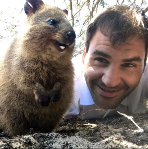 Roger Federer makes friends with quokka on Rottnest Island