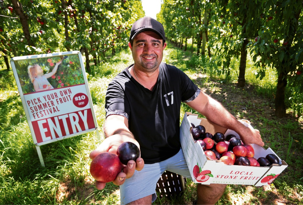 Walliston orchardist Santino Costanzo, owner of S&R Orchard Perth WA. Picture: David Baylis.