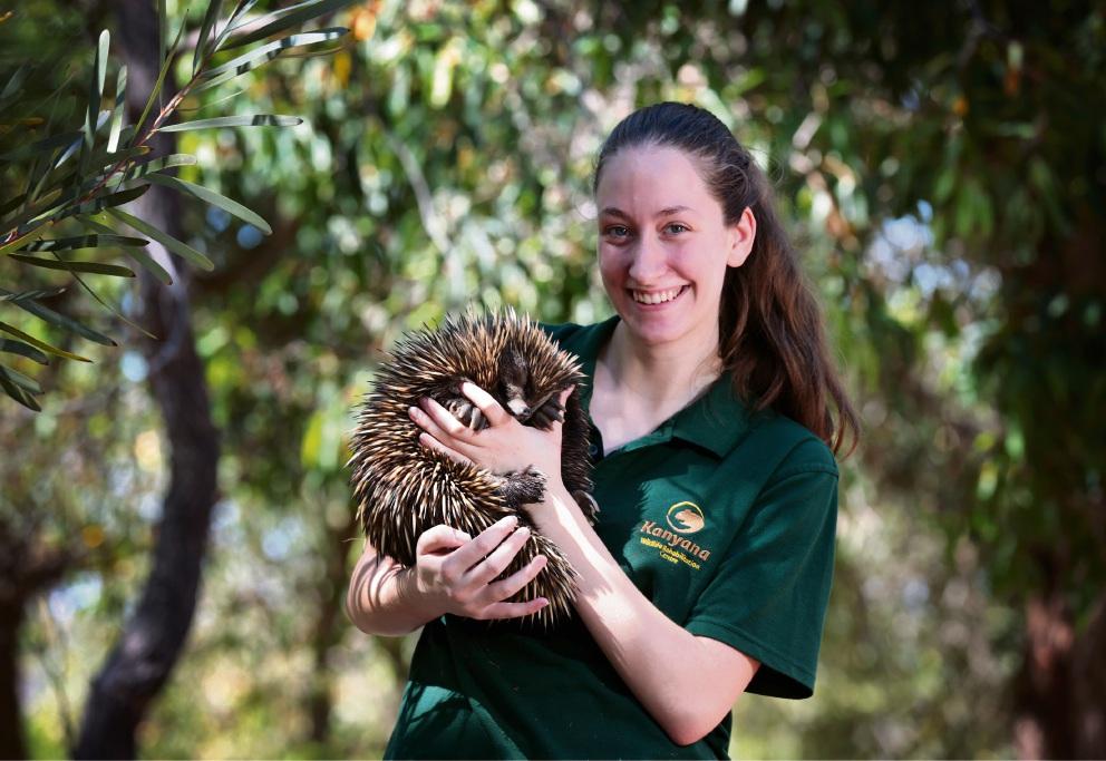 Kanyana Wildlife Rehabilitation Centre volunteer Tara Duff with Aruba, a female Echidna. Kanyana will hold its fundraising day in Forrestfield on January 18. Photo: David Baylis