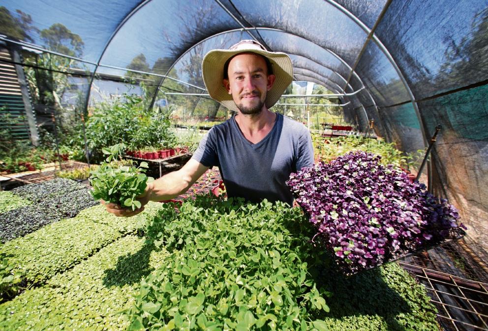 Mundaring's Giving Greens charity gets green light