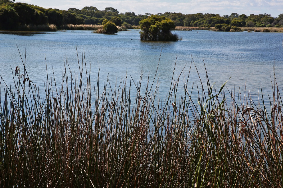 Yellagonga Regional Park. Picture: Martin Kennealey d467270