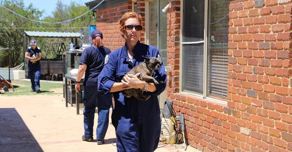 RSPCA WA inspectors seized 66 puppies and kittens from a property in Gingin last week.