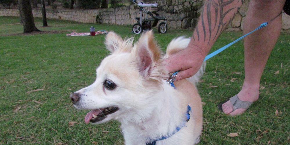 Dog owner left with hefty vet bill after dog attack