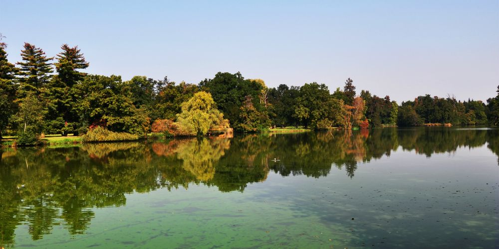 An pond covered by cyanobacteria. Picture: Stock image