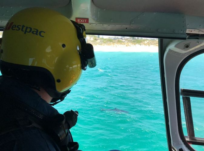 The 3.5m great white spotted by Surf Life Saving WA this morning. Picture: SLSWA/Twitter