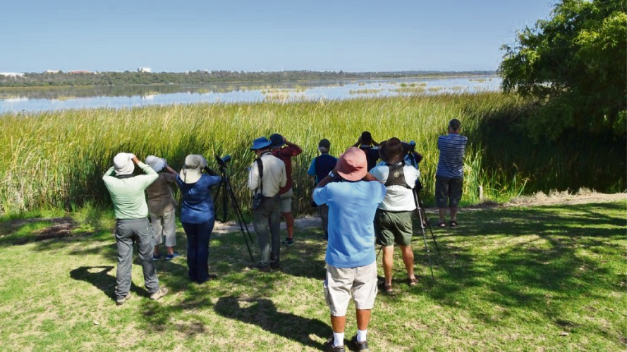 Bird watchers at Lake Joondalup try to catch a glimpse of the rare birds.