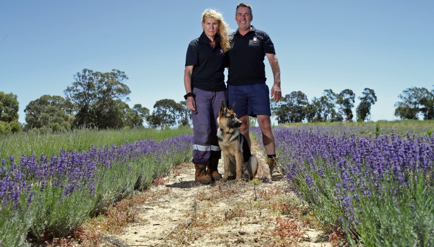 Karla Champion and Gary Wood from Yanchep Lavender with their dog Annie. Photo: Martin Kennealey