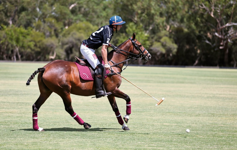 Polo player Hugo Fischer and his Polo pony Veuve, seen here at the Duncraig Stud in West Swan. Picture: David Baylis.