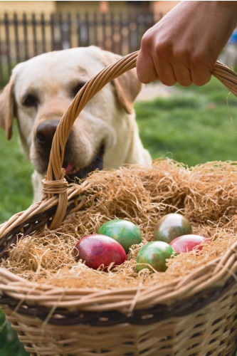 Pet parents should be aware of the dangers at Easter.