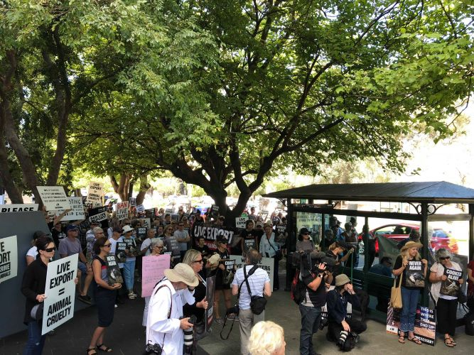 Hundreds of people gathered in Perth to protest live animal exports.