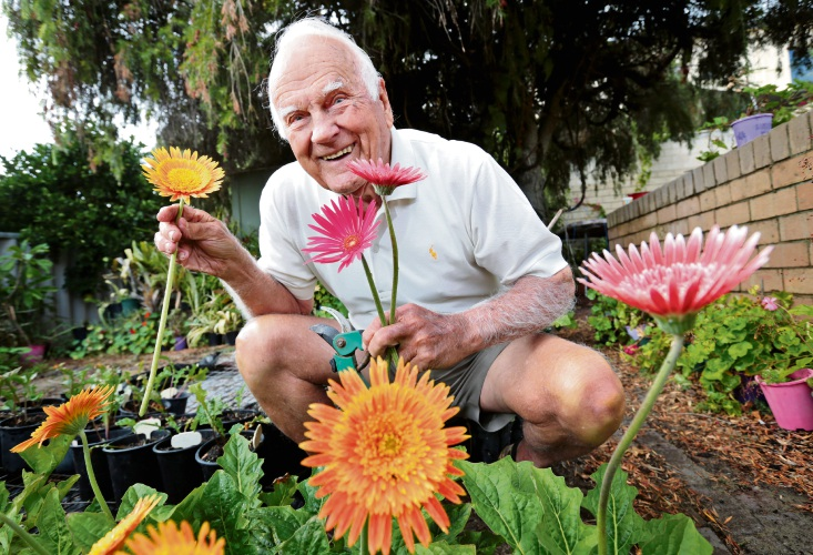 Keen gardener and gerbera grower, 92 year old Gerry Gillett of Dianella. Gerry has been a member of the Gerbera Research Group for 33 years and they will hold their annual show in May. Photo: David Baylis