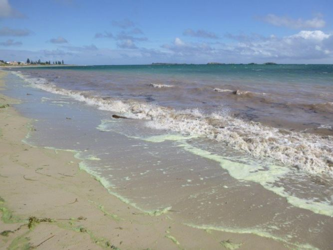 Warning issued over algal bloom at Shoalwater Bay