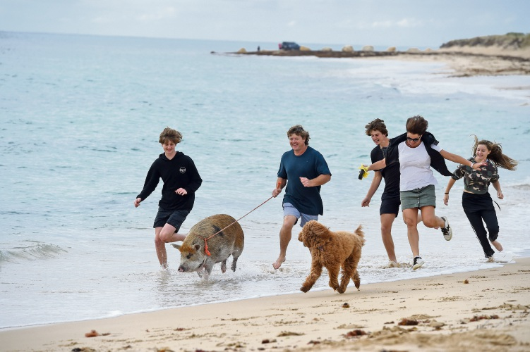 Dave and Sarah Sears with Jack, Billy and Ruby, Matilda the pig and Betsy the dog. Photo: Jon Hewson