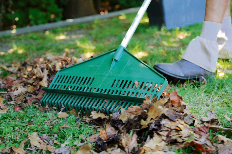 It is important to remove fallen leaves from the lawn as soon as possible.