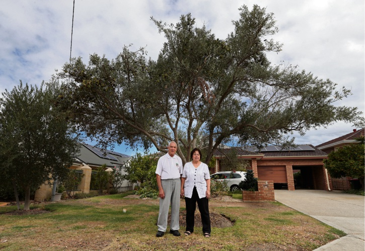 Raffaele and Maria Papalia (Innaloo) with their olive tree. Picture: Martin Kennealey d481882