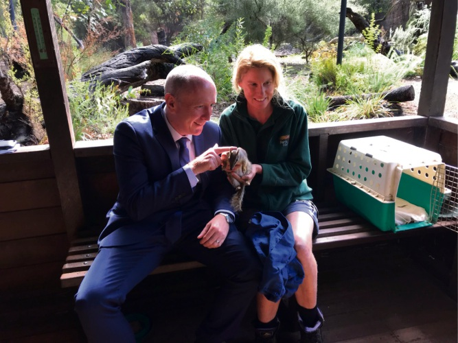Minister for Environment Stephen Dawson and senior keeper Lisa Mantello with numbat Whiskie