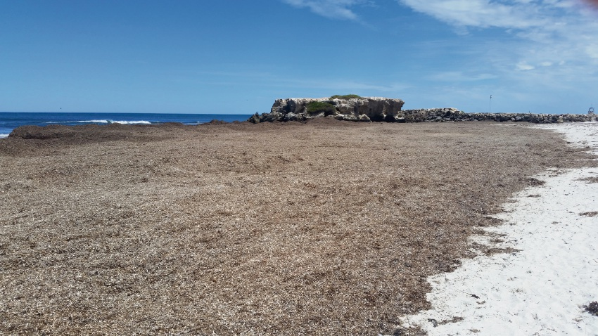 The accessible section of beach covered with seaweed last summer.