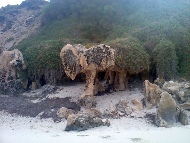 'The Elephant'. Picture: John Bassett