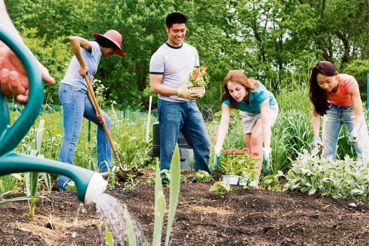 A group in a community garden.