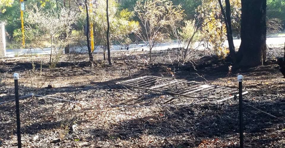 Burnt bush and damaged fencing in the aftermath of the reduction burn. Pictures: Trisha Hazell