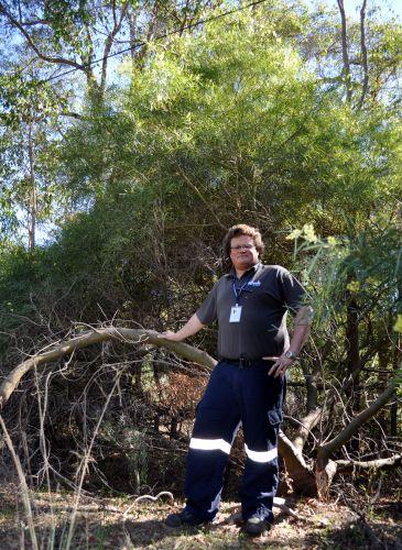 Fire hazard inspection officer Allan Entwistle standing in front of a Flinders Range Wattle.