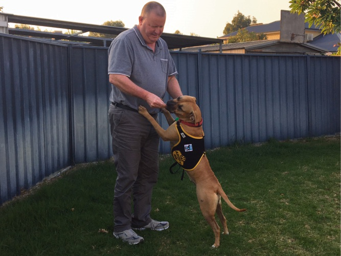Iain Tompsett is hoping to find a new home for his foster dog Annie.