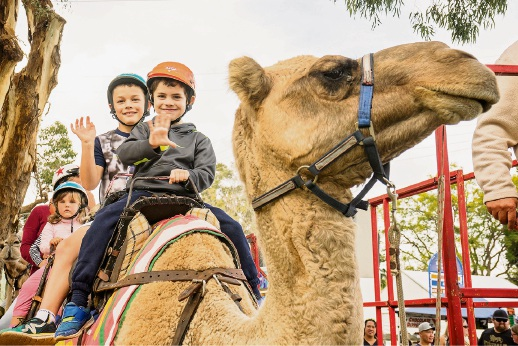 The much-loved camel rides will return for the 2018 LiveLighter Pinjarra Festival. Picture: Josh Cowling Photography