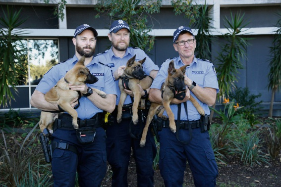 Senior Constable Damien Thompson, Sergeant Nick Berragan and Canine Unit Officer in Charge Senior Sergeant Glen Potter with Jester, Goose and Maverick. Pictures: Bronwyn Donovan