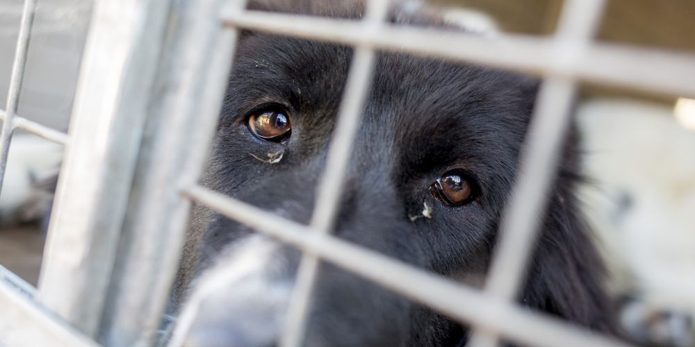 Mandurah ranked 6th in this year's top 10 hotspots for animal cruelty. Picture: iStock