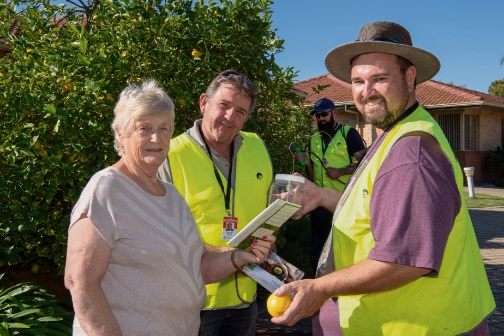 Department of Primary Industries and Regional Development officers David Budd and David Collins discuss Queensland fruit fly surveillance and trapping with Como resident Helen Buckley while officer Rodney Phillips treats trees in the background.