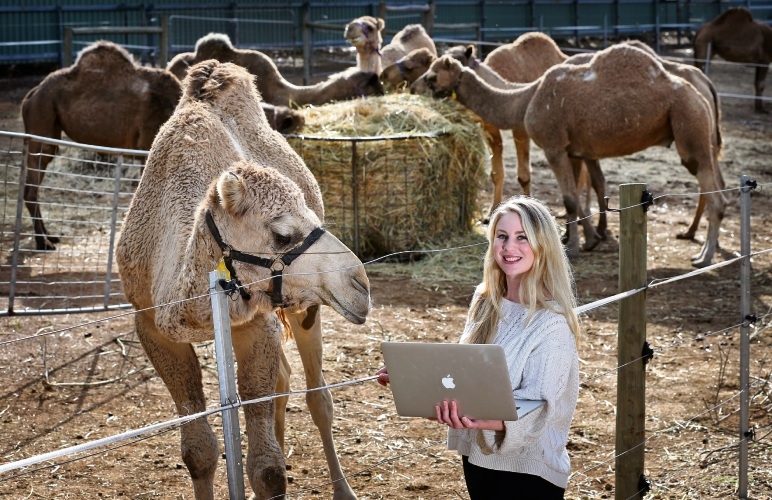 Emerging producer Brooke Silcox of Gooseberry Hill at the Calamunnda Camel Farm in Paulls Valley. Picture: David Baylis d483395