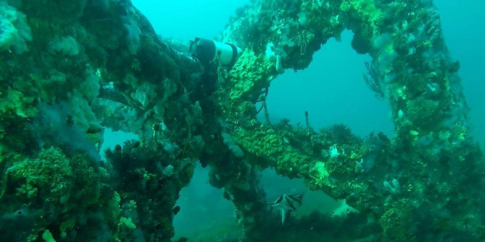 Diving in Dunsborough. Picture: Recfishwest