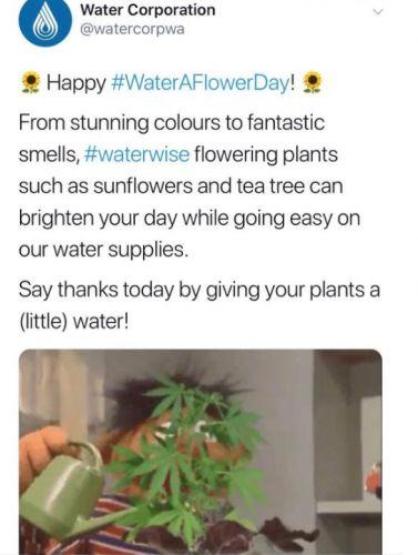 Water Corporation of WA tweet beyond b'leaf