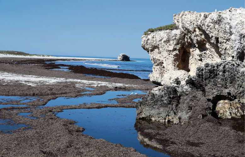 Frustration over seaweed build up on the beach near Two Rocks Marina prompted calls for another beach access farther south. Picture: Martin Kennealey d468583