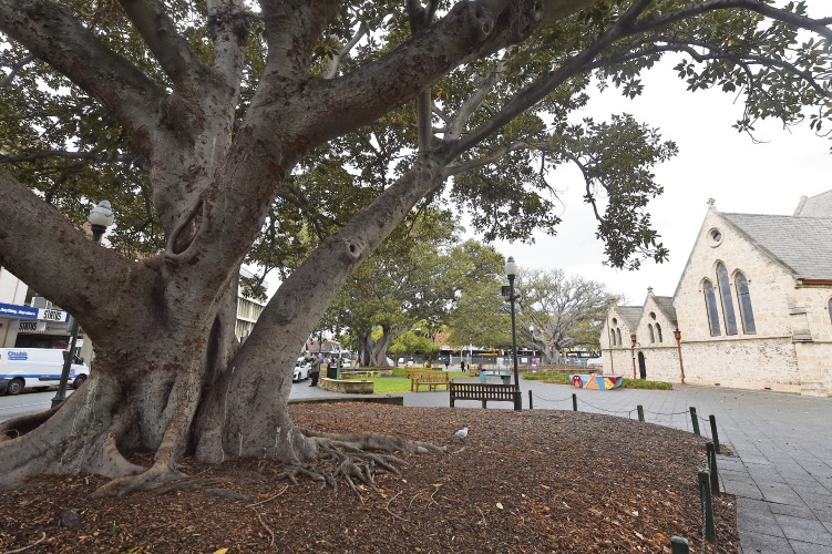 The community can help guide the City on managing the distressed trees.
