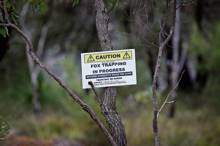 Kalamunda councillor calls for ban on fox traps