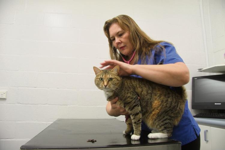 Senior veterinarian Jade Hilzinger checks over Madam.