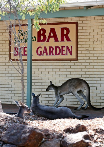 Staff will be allowed to feed kangaroos at the tavern located inside John Forrest National Park. d481377