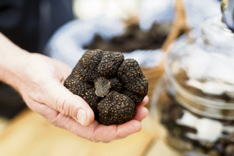Black Gold, aka fresh black truffle unearthed from Manjimup. Picture: Jessica Shaver