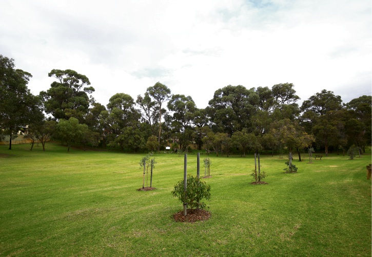 Mature trees cover the public open space site in Carine proposed for residential development. Photo: Matt Jelonek